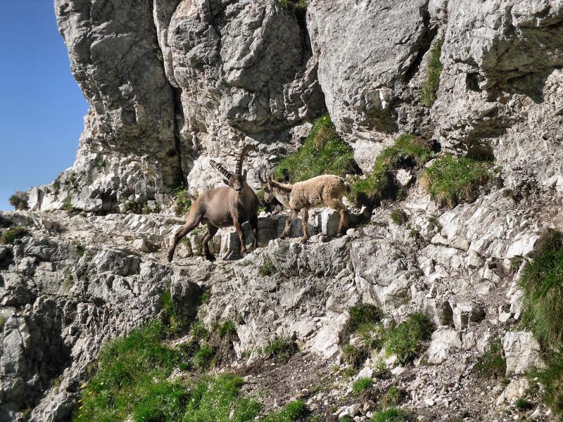 Monte zabus dai piani del montasio for Grandi piani del ranch